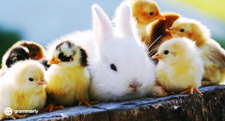 9 Adorable Animal Collective Nouns