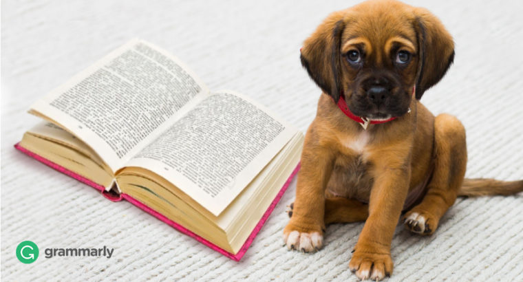 11 Adorable Canine Readers