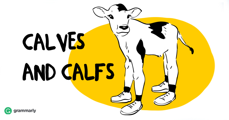 "How to Use ""Calves"" and ""Calfs"" Correctly Image"