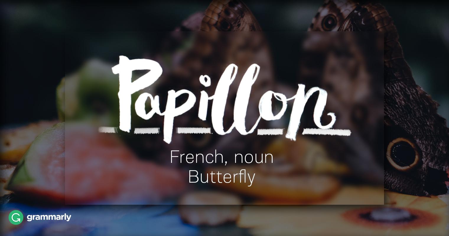 Papillon Definition