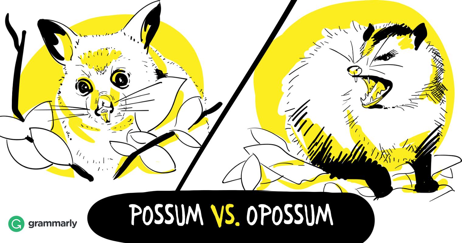 possum cartoon - Google Search   Cartoon styles, Clip art, Possum