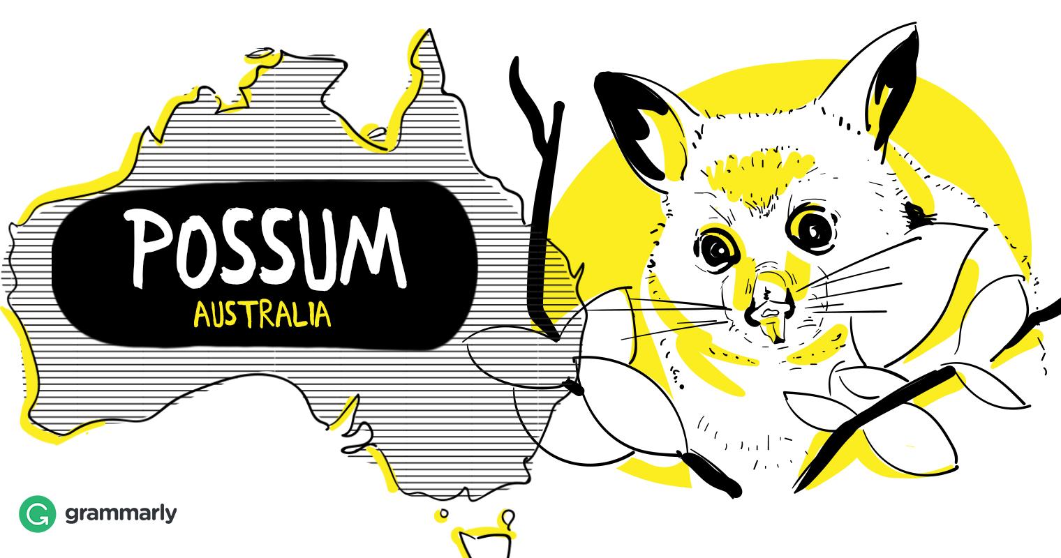 Opossum in Australia Drawing